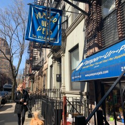 Pet store Pamper Ur Pets in Tribeca and Chelsea